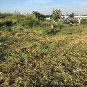 изрязване на храсти, подрязване на храсти, премахване на храсти